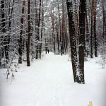 Grypo wynocha! Bieganie w śniegu.